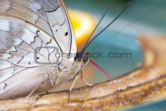 Beautiful Butterfly eating