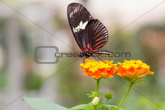 Beautiful Butterfly sitting on flower