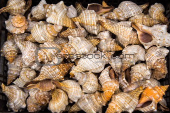 Seashells for sale.
