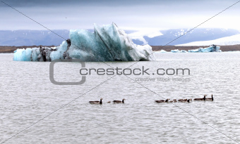A glacial lake, ice and geese