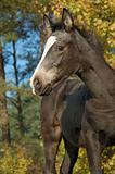 foal in fall