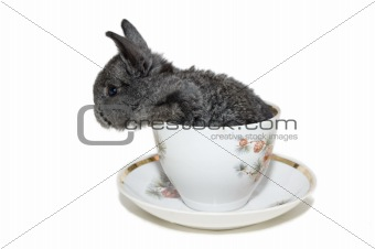 grey small rabbit in the white cup