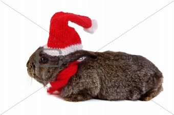 grey rabbit dressed like santa