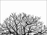 Abstract vector of black tree on white background 