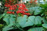 Red Elongated Flowers