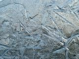 Shapes of ice