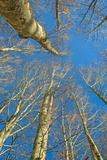 Branches In Forest Urbasa, Navarra