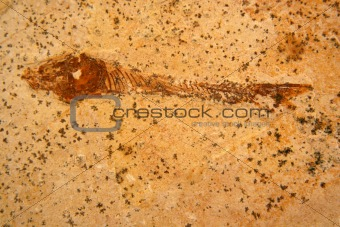 Fossile fish background texture
