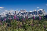 Dolomites Flowers