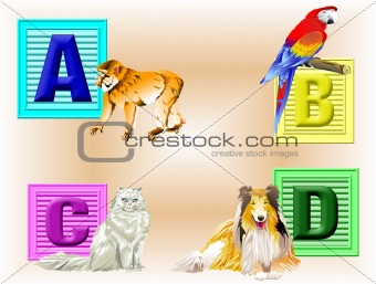 Animals ABCD