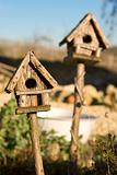 Bird Houses in Sunshine