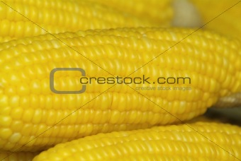 Corn on the cob abstract