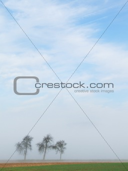 Three trees in the mist