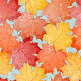 Seamless grunge pattern of colored maple leaves