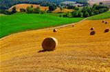 Tuscany Landscap