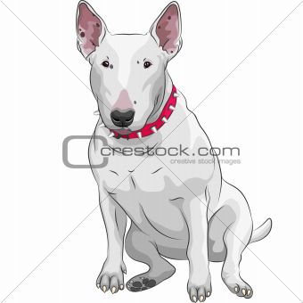 vector cartoon Bull Terrier Dog breed sitting