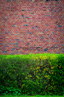 Green bushes at an brown wall
