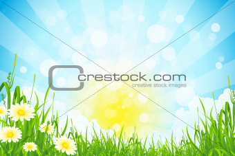 Green Summer Background