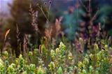 summer sunset wildflowers and grasses