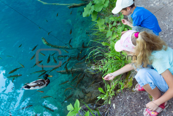 Small fish shoal and wild ducks in azure lake