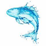 water fish splash