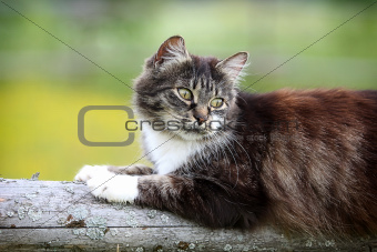 Gray cat on log