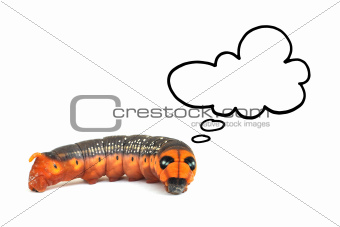 orange caterpillar thinking isolated on white background