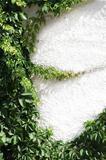 Climbing plant natural frame