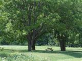 picnic table under trees