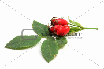 red rose hip