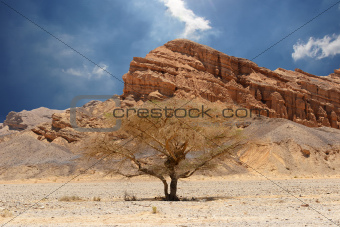 Desert tree and mountains