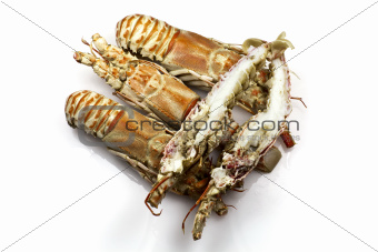 Champagne Lobster