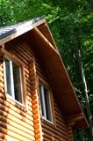 Summer wooden cottage in forest at sunny day