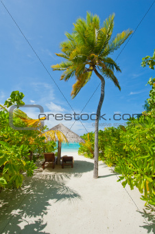 Beach with coconut palms and deck chair