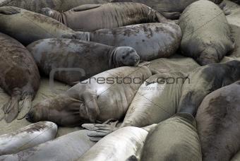 Beach of Seals