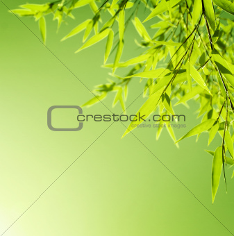 Fresh bamboo leaves border