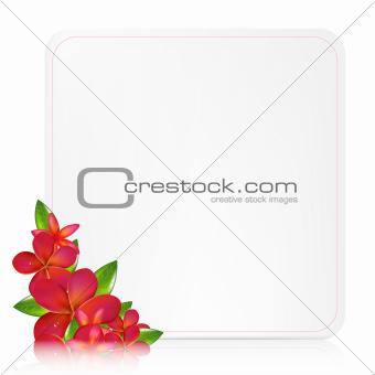 Blank Gift Tag With Pink Frangipani