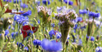 Blooming wild flowers on a meadow