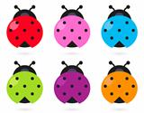 Cute colorful Ladybug set isolated on white