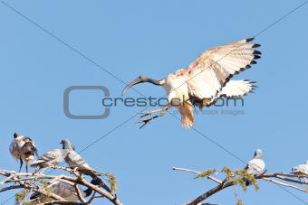 A Crane landing