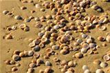 Sea shore texture