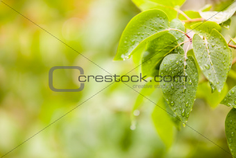 Few leaves with raindrops and blurred background