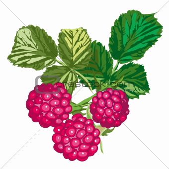 Raspberries With Leaves, isolated on white background