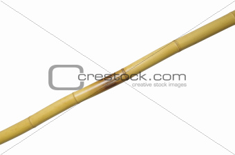 one yellow bamboo on white background