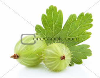 Green gooseberry fruit with leaf on white