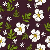 Seamless texture with white flower