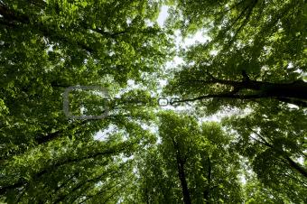 green summer trees