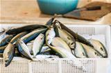 fresh fishes at market