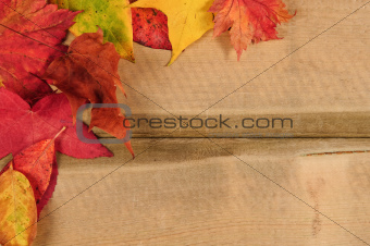Vibrant Autumn Fall Season leaves on rustic wood background