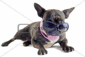 french bulldog and sunglasses